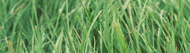 Bandeau de la page 'Environnement