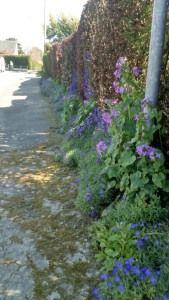 fleurissement trottoir